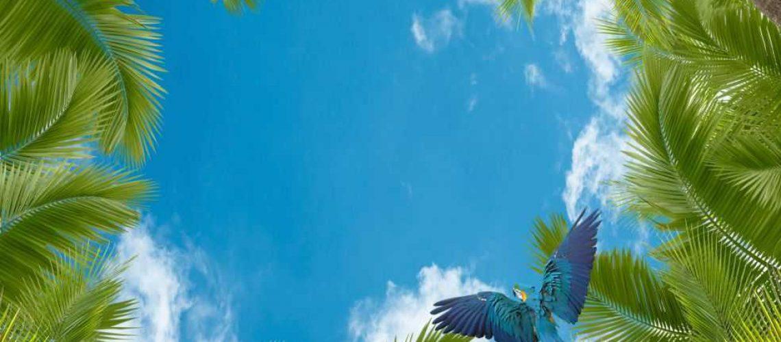 Джунгли и небо3