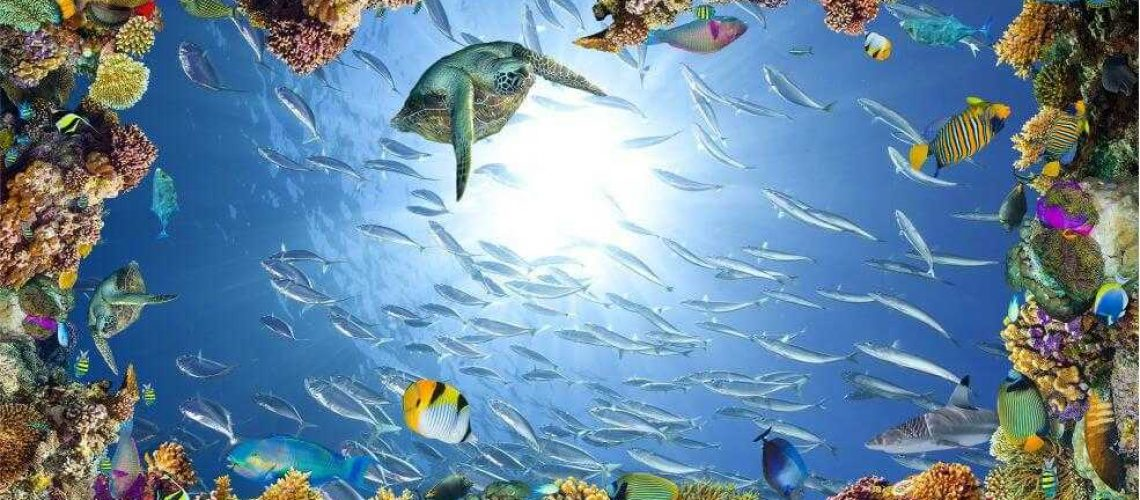 подводные-рифи3